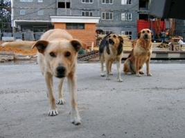 Мэр Николаева назвал решение проблемы бездомных животных одной из первоочередных задач