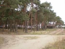 Государству возвращены два земельных участка соснового урочища «Октябрьское» - прокуратура