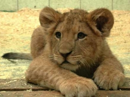В Одессе обсуждают развитие зоопарков