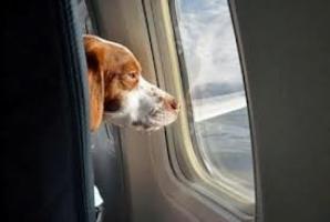 Число пассажиров новой международной авиалинии Херсон-Стамбул-Херсон приблизилось к тысяче