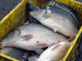 В Николаеве правоохранители задержали водителя со 120 кг рыбы