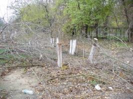 За уничтожение деревьев работникам Николаевоблэнерго  грозит до 5 лет тюрьмы
