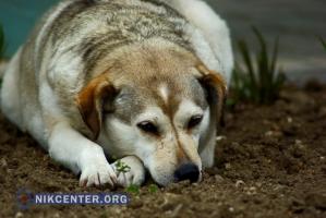 Городская власть Херсона хочет бороться с бродячими собаками с помощью... общественников