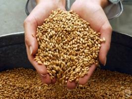 Земледельцы николаевщины собрали первый миллион тонн зерна