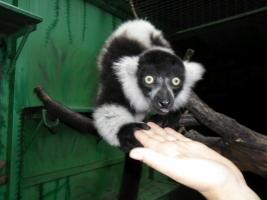 Николаевцев просят приносить новогодние елки в зоопарк