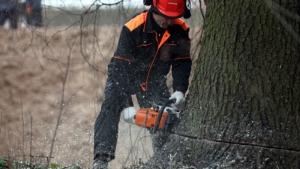 В Одесской области незаконно уничтожают лес