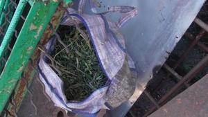 В Николаевской области местный житель выращивал у себя дома 100 кустов конопли