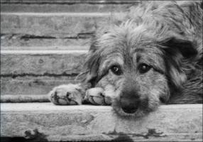 Центр для бездомных животных откроется в Николаеве в ближайшие дни