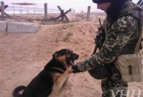 От российских военных к украинским через границу Крыма дезертировал четвероногий боец