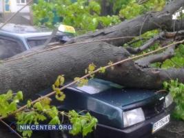 В Николаеве упавшее дерево придавило такси