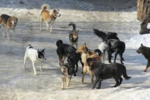 В Николаеве с начала года бродячие собаки покусали более 250 человек (ВИДЕО)