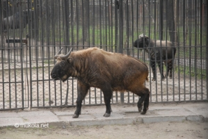 В николаевский зоопарк привезли диковинных зверей