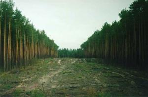 На Николаевщине прокуратура требует вернуть государству земельные участки лесного фонда стоимостью свыше 16,8 млн. грн.