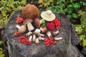 Жителям Одесской области ограничат бесплатный сбор грибов и ягод