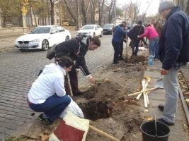 Активисты высадили более 100 деревьев в Одессе
