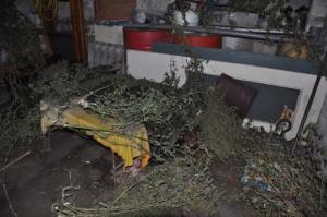 41-летний николаевец хранил у себя дома 5 кг каннабиса