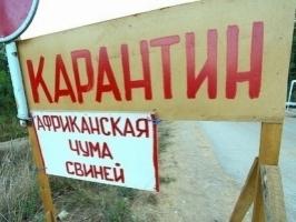 В Одесской области снова обнаружены очаги африканской чумы свиней