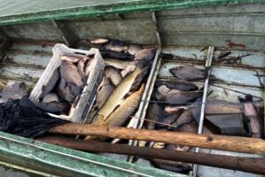 В Одесской области поймали на браконьерстве инспекторов госрыбоохраны