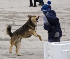Николаевцы опасаются за жизнь своих близких из-за нападений собак