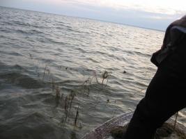На Николаевщине браконьеры раскинули сети на 600 метров