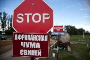 В Николаевской области начато расследование по факту вспышки АЧС