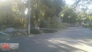 На жительницу Одесской области упал тополь