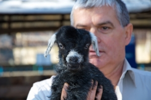 В Одесском зоопарке первым новорожденным малышом в год Козы стал козленок