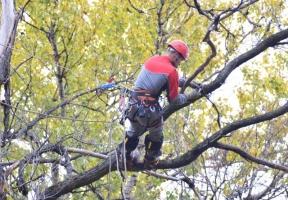 В Николаеве предприниматель получит полмиллиона за обрезку и снос деревьев в Центральном районе