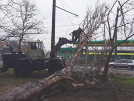 В Николаеве из-за непогоды валятся деревья