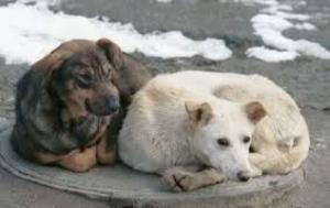 Николаевский «Центр защиты животных» ещё не открывшись, потратил полмиллиона бюджетных средств