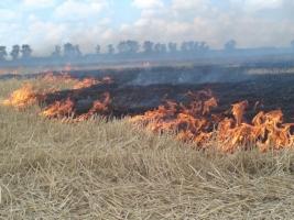 На Николаевшине спасатели ликвидировали пожар площадью 3 га