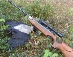 В Николаеве сотрудник ГФС лишился своей должности из-за стрельбы по воронам