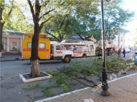 Из-за сильного ветра в Одессе падают деревья
