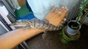 Житель Одесской области нашел крокодила возле своего дома