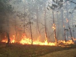 13 июня должны назвать причину пожара в лесу под Херсоном
