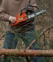 Жителю Одесской области грозит до 3 лет тюрьмы за вырубку деревьев