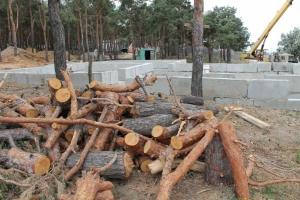 Экоинспекторы Николаевской области не видят проблем в том, что кто-то вырубает лес в черте Николаева
