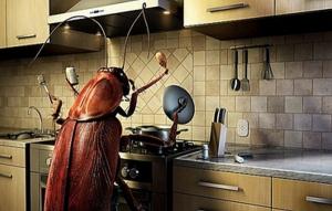 Николаевские насекомые обойдутся бюджету более чем в 800 тыс. грн.
