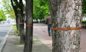 В Николаеве деревья обвязали