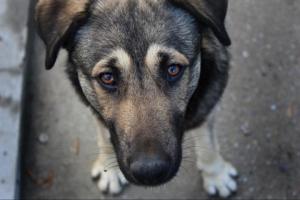 Депутаты горсовета в Одесской области наживались на захоронении собак