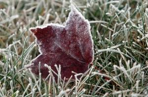 Завтра в Украину придут морозы
