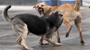 В Николаеве собака покусала женщину, которая защищала своего ребенка
