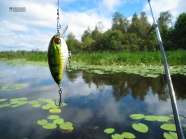 Херсонрыбоохрана изымает рыбу тоннами