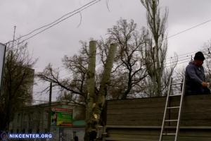В Херсоне возник скандал из-за непонятной «обрезки» деревьев в центре города
