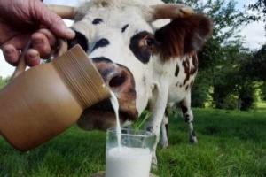 Итоги работы животноводческой отрасли Херсонщины за 1-й квартал 2015 года
