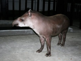Николаевский зоопарк пополнился животными из Италии