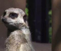 Школьники взяли шефство над сурикатами из Николаевского зоопарка
