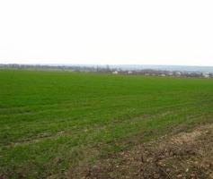 В Вознесенском районе неизвестные перепахали 24 га озимых посевов пшеницы