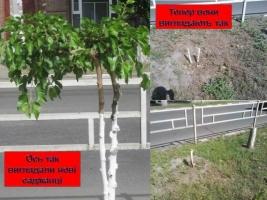 В Херсоне неизвестные целенаправленно уничтожают редкие деревья