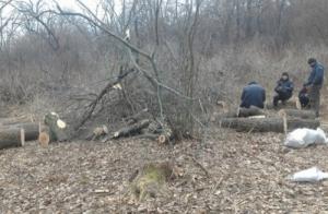 Под Одессой пойманы нелегальные лесорубы